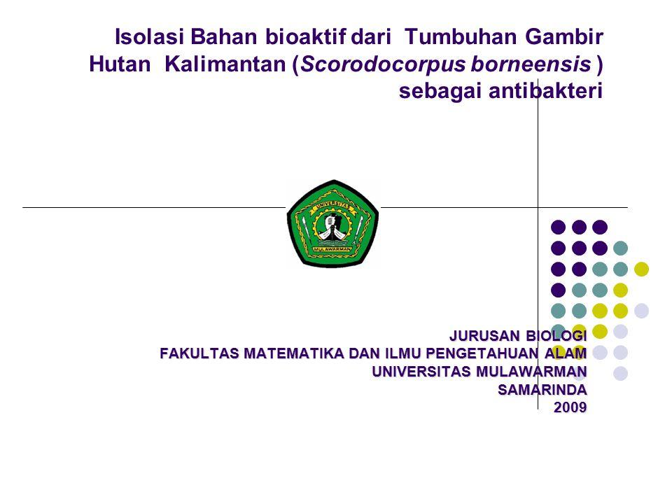 Isolasi Bahan bioaktif dari Tumbuhan Gambir Hutan Kalimantan (Scorodocorpus borneensis ) sebagai antibakteri JURUSAN BIOLOGI FAKULTAS MATEMATIKA DAN ILMU PENGETAHUAN ALAM UNIVERSITAS MULAWARMAN SAMARINDA2009