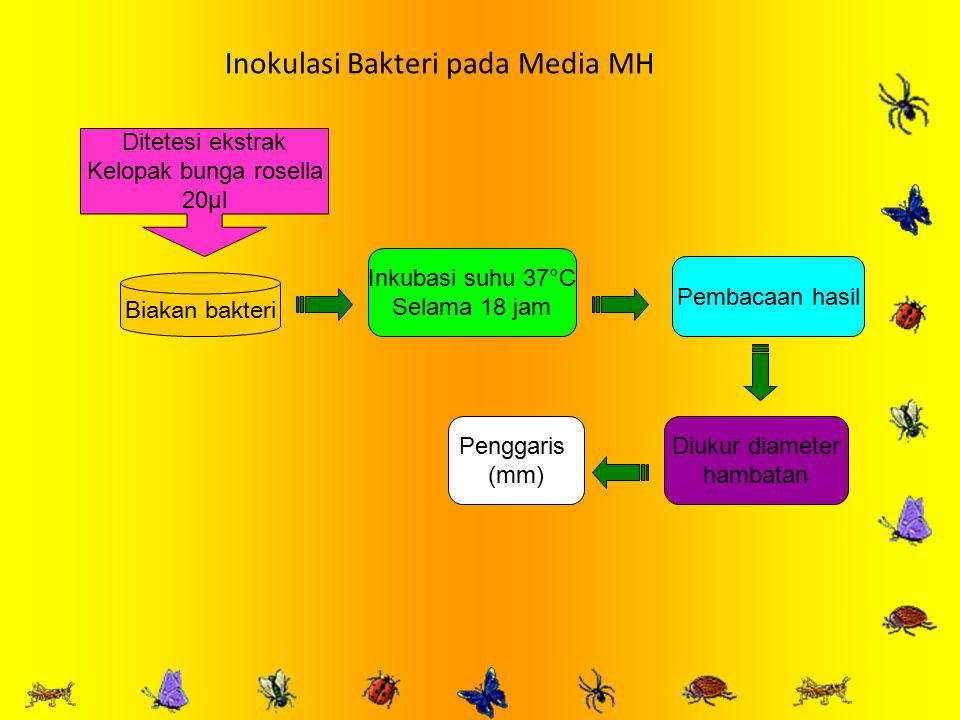 Inokulasi Bakteri pada Media MH Biakan bakteri Ditetesi ekstrak Kelopak bunga rosella 20µl Inkubasi suhu 37°C Selama 18 jam Pembacaan hasil Diukur diameter hambatan Penggaris (mm)