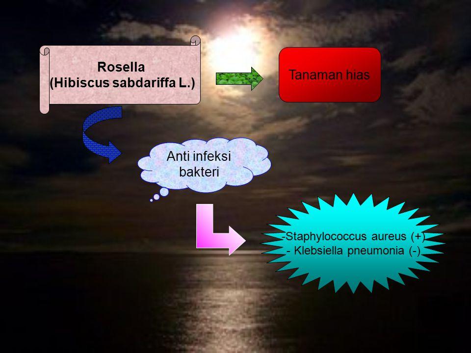 Rosella (Hibiscus sabdariffa L.) Anti infeksi bakteri -Staphylococcus aureus (+) - Klebsiella pneumonia (-) Tanaman hias