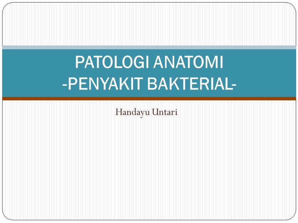 Handayu Untari PATOLOGI ANATOMI -PENYAKIT BAKTERIAL-