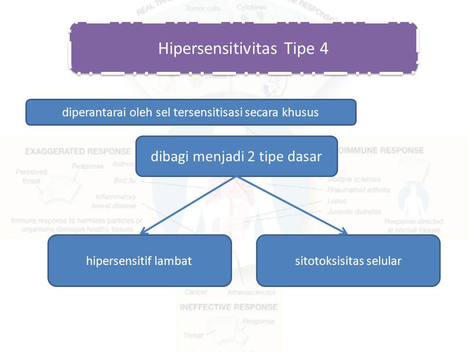 Hipersensitivitas Tipe 4 diperantarai oleh sel tersensitisasi secara khusus dibagi menjadi 2 tipe dasar hipersensitif lambatsitotoksisitas selular