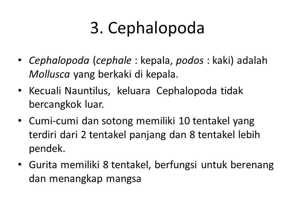 3. Cephalopoda Cephalopoda (cephale : kepala, podos : kaki) adalah Mollusca yang berkaki di kepala. Kecuali Nauntilus, keluara Cephalopoda tidak berca