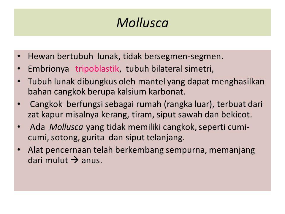 Mollusca Hewan bertubuh lunak, tidak bersegmen-segmen. Embrionya tripoblastik, tubuh bilateral simetri, Tubuh lunak dibungkus oleh mantel yang dapat m