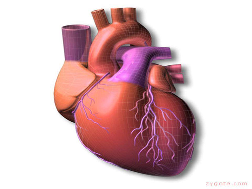 ATRIAL FIBRILASI Irama = Tidak Teratur Frekuensi (HR) = Frekuensi atrium > 350 kali/menit Frekuensi ventrikel bervariasi.