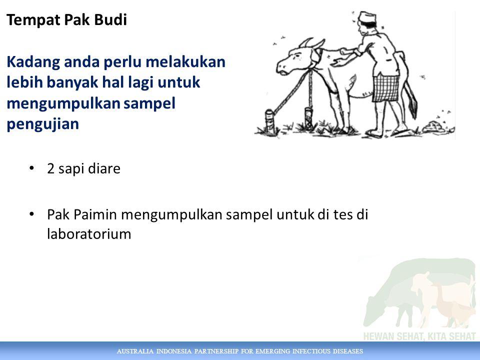 AUSTRALIA INDONESIA PARTNERSHIP FOR EMERGING INFECTIOUS DISEASES 2 sapi diare Pak Paimin mengumpulkan sampel untuk di tes di laboratorium Tempat Pak B