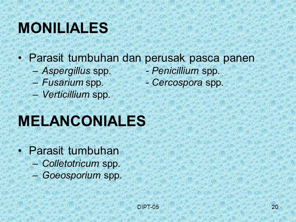 20DIPT-0520 MONILIALES Parasit tumbuhan dan perusak pasca panen –Aspergillus spp.- Penicillium spp. –Fusarium spp.- Cercospora spp. –Verticillium spp.