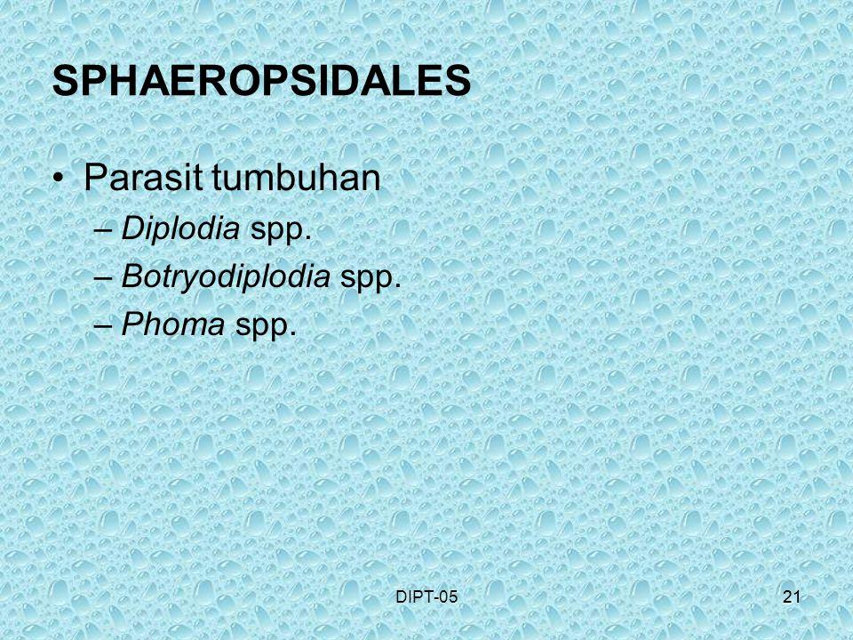 21DIPT-0521 SPHAEROPSIDALES Parasit tumbuhan –Diplodia spp. –Botryodiplodia spp. –Phoma spp.