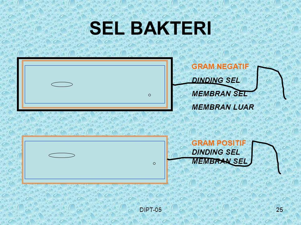 25DIPT-0525 SEL BAKTERI GRAM NEGATIF DINDING SEL MEMBRAN SEL MEMBRAN LUAR GRAM POSITIF DINDING SEL MEMBRAN SEL