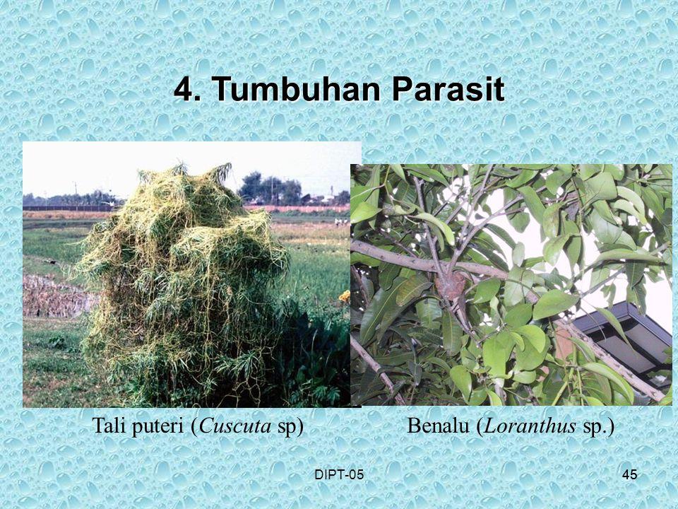 45DIPT-0545 4. Tumbuhan Parasit Tali puteri (Cuscuta sp)Benalu (Loranthus sp.)
