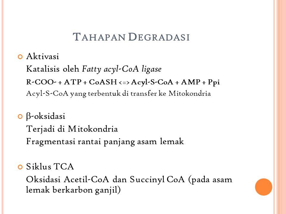 T AHAPAN D EGRADASI Aktivasi Katalisis oleh Fatty acyl-CoA ligase R-COO- + ATP + CoASH Acyl-S-CoA + AMP + Ppi Acyl-S-CoA yang terbentuk di transfer ke Mitokondria  -oksidasi Terjadi di Mitokondria Fragmentasi rantai panjang asam lemak Siklus TCA Oksidasi Acetil-CoA dan Succinyl CoA (pada asam lemak berkarbon ganjil)