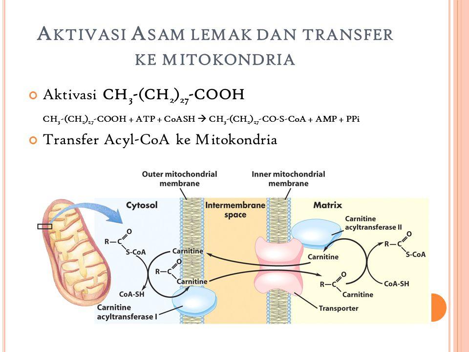 A KTIVASI A SAM LEMAK DAN TRANSFER KE MITOKONDRIA Aktivasi CH 3 -(CH 2 ) 27 -COOH CH 3 -(CH 2 ) 27 -COOH + ATP + CoASH  CH 3 -(CH 2 ) 27 -CO-S-CoA + AMP + PPi Transfer Acyl-CoA ke Mitokondria