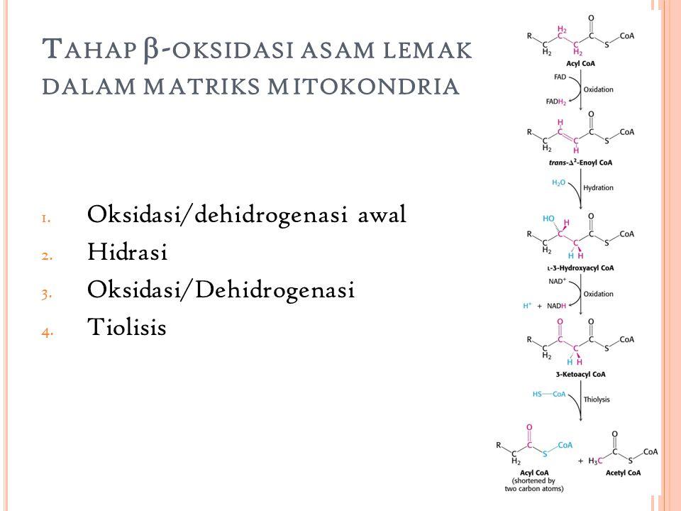 T AHAP  - OKSIDASI ASAM LEMAK DALAM MATRIKS MITOKONDRIA 1.