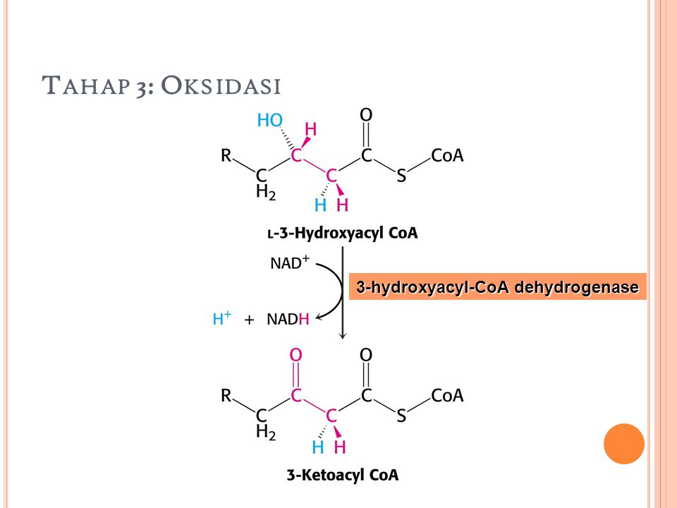 T AHAP 3: O KSIDASI 3-hydroxyacyl-CoA dehydrogenase
