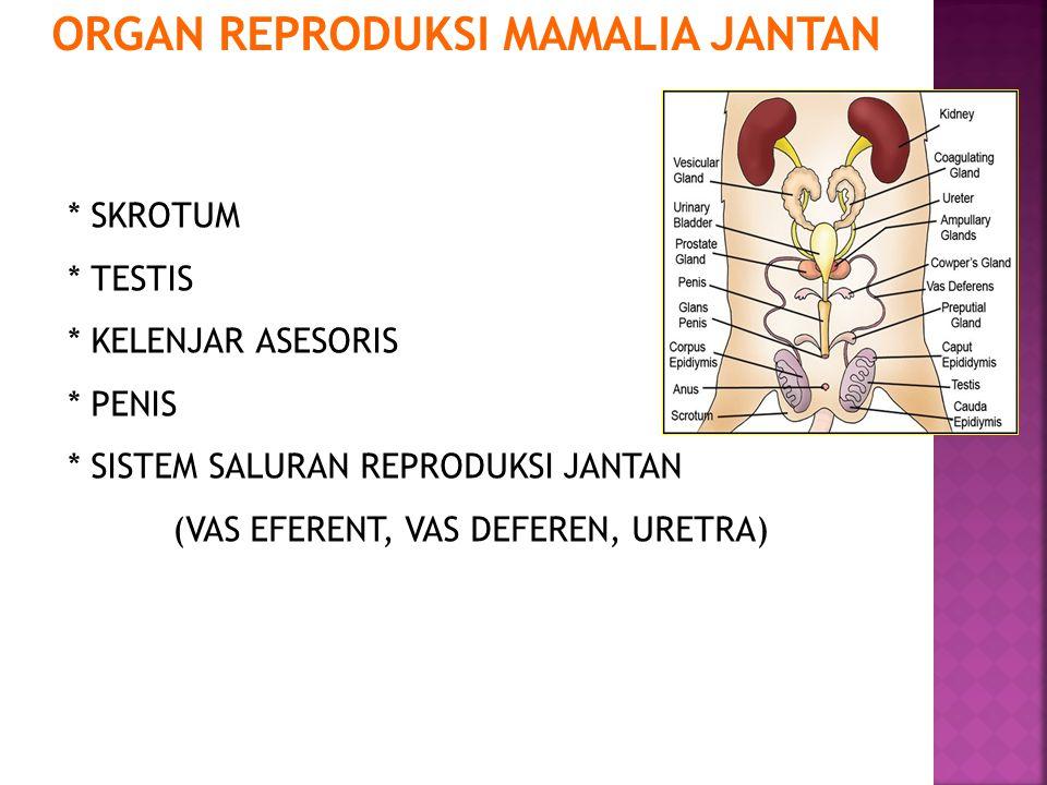 Reproductive anatomy of the human male Figure 46.10 Erectile tissue of penis Prostate gland (Urinary bladder) Bulbourethral gland Vas deferens Epididymis Testis Seminal vesicle (behind bladder) Urethra Scrotum Glans penis