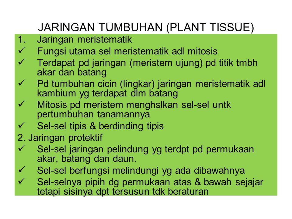 JARINGAN TUMBUHAN (PLANT TISSUE) 1.Jaringan meristematik Fungsi utama sel meristematik adl mitosis Terdapat pd jaringan (meristem ujung) pd titik tmbh