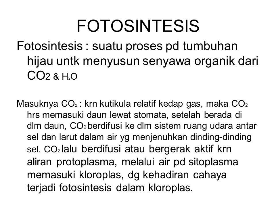 FOTOSINTESIS Fotosintesis : suatu proses pd tumbuhan hijau untk menyusun senyawa organik dari CO 2 & H 2 O Masuknya CO 2 : krn kutikula relatif kedap