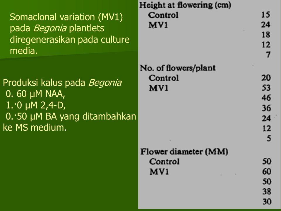 Somaclonal variation (MV1) pada Begonia plantlets diregenerasikan pada culture media. Produksi kalus pada Begonia 0. 60 μΜ NAA, 1.·0 μΜ 2,4-D, 0.·50 μ