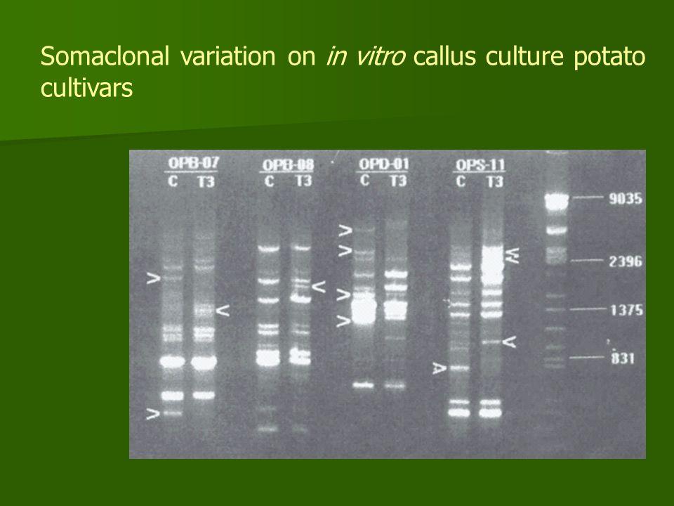 Somaclonal variation on in vitro callus culture potato cultivars