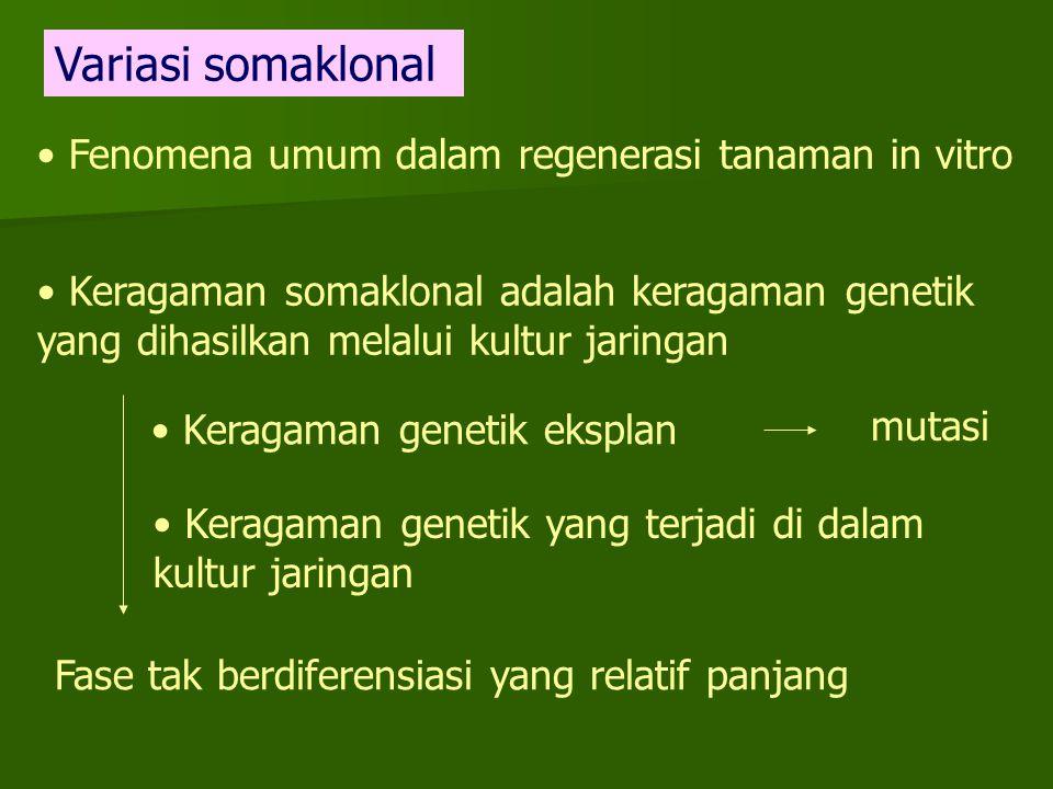 Fenomena umum dalam regenerasi tanaman in vitro Keragaman somaklonal adalah keragaman genetik yang dihasilkan melalui kultur jaringan Keragaman geneti