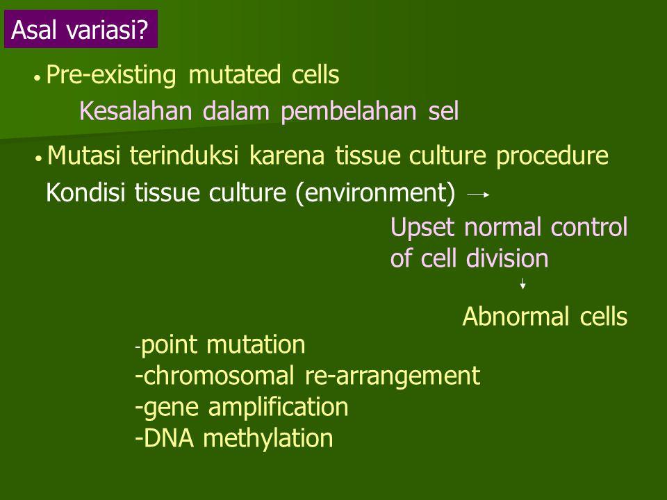 Asal variasi? Pre-existing mutated cells Mutasi terinduksi karena tissue culture procedure Kesalahan dalam pembelahan sel Kondisi tissue culture (envi