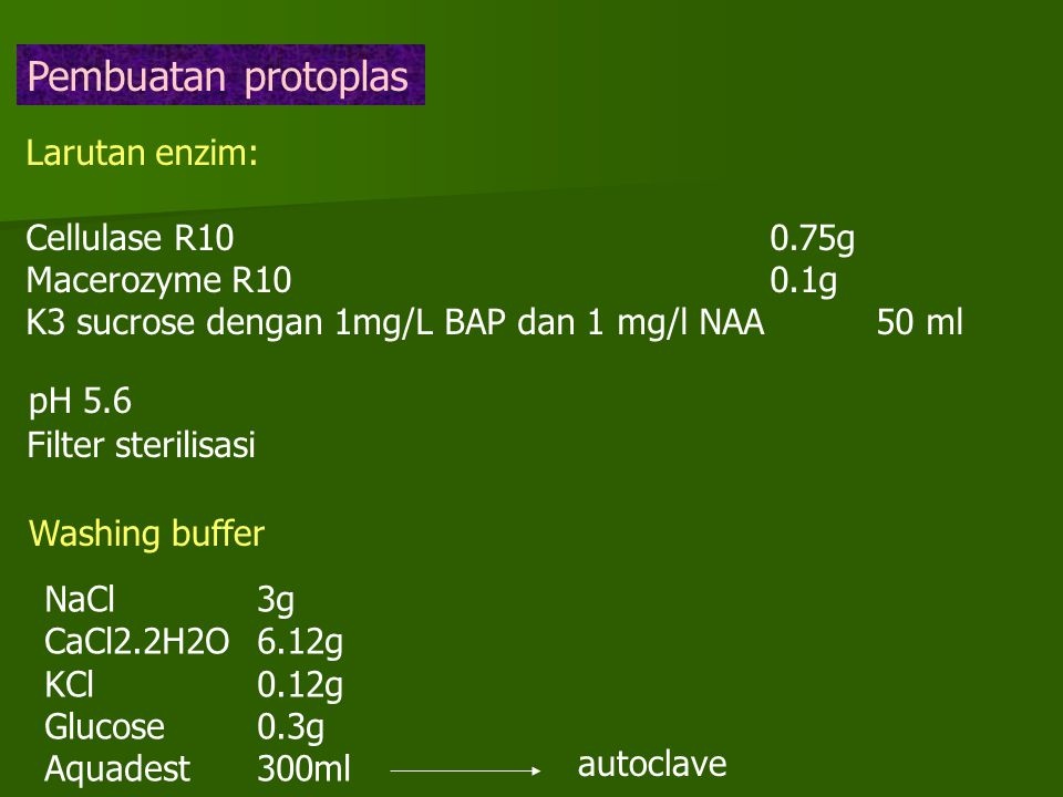 Pembuatan protoplas Larutan enzim: Cellulase R100.75g Macerozyme R100.1g K3 sucrose dengan 1mg/L BAP dan 1 mg/l NAA50 ml pH 5.6 Filter sterilisasi Washing buffer NaCl3g CaCl2.2H2O6.12g KCl0.12g Glucose0.3g Aquadest300ml autoclave