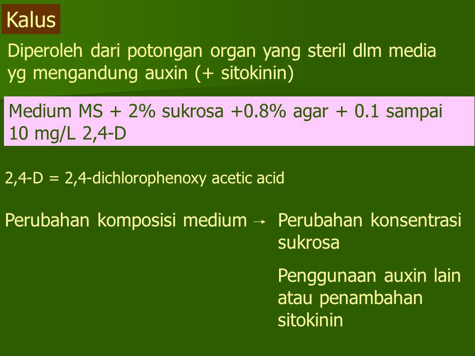 Diperoleh dari potongan organ yang steril dlm media yg mengandung auxin (+ sitokinin) Kalus Medium MS + 2% sukrosa +0.8% agar + 0.1 sampai 10 mg/L 2,4-D 2,4-D = 2,4-dichlorophenoxy acetic acid Perubahan komposisi mediumPerubahan konsentrasi sukrosa Penggunaan auxin lain atau penambahan sitokinin