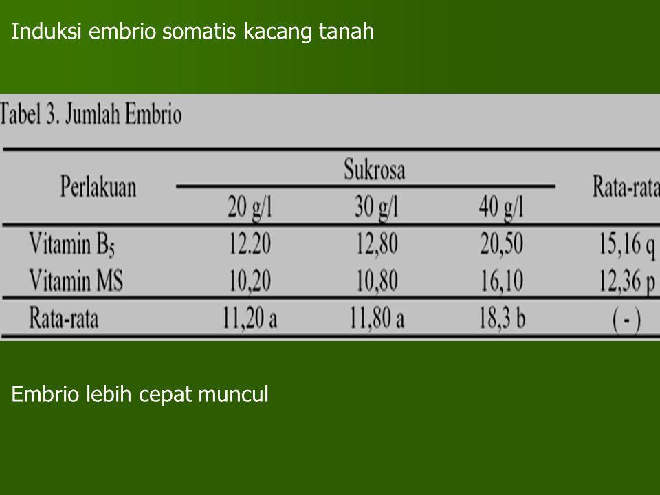 Induksi embrio somatis kacang tanah Embrio lebih cepat muncul