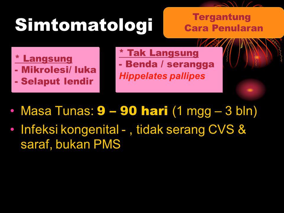 Simtomatologi Masa Tunas: 9 – 90 hari (1 mgg – 3 bln) Infeksi kongenital -, tidak serang CVS & saraf, bukan PMS Tergantung Cara Penularan * Langsung -