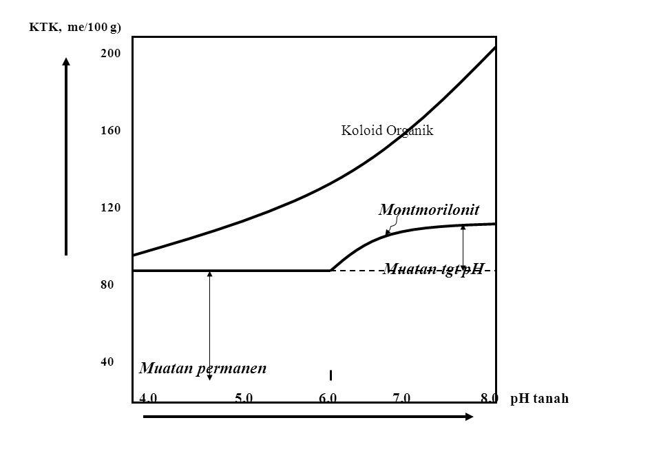KAPASITAS TUKAR KATION [ KTK ] PENGARUH pH TANAH Sebagian dari muatan negatif pd koloid tanah tergantung pd pH, sehingga kapasitas jerapan juga dipeng