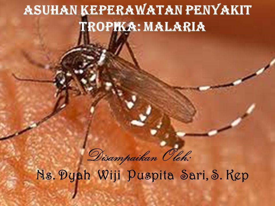 Asuhan Keperawatan Penyakit Tropika: Malaria Disampaikan Oleh: Ns. Dyah Wiji Puspita Sari, S. Kep