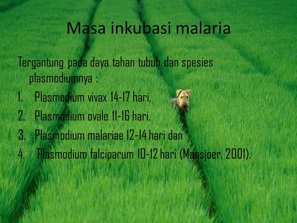 Masa inkubasi malaria Tergantung pada daya tahan tubuh dan spesies plasmodiumnya : 1.Plasmodium vivax 14-17 hari, 2.Plasmodium ovale 11-16 hari, 3.Pla
