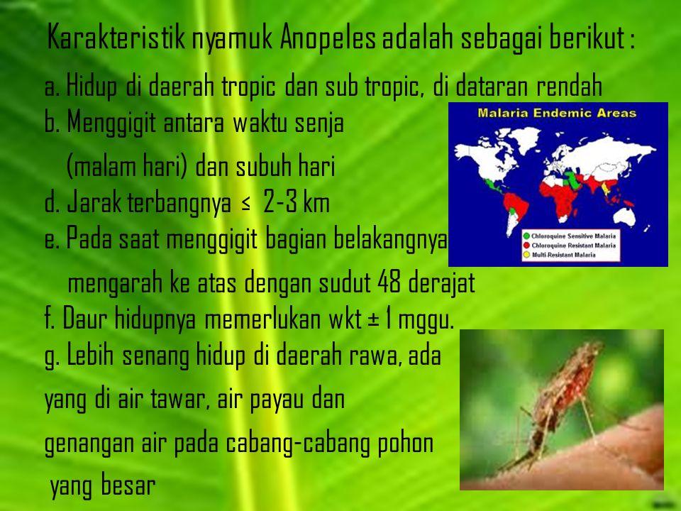 Karakteristik nyamuk Anopeles adalah sebagai berikut : a. Hidup di daerah tropic dan sub tropic, di dataran rendah b. Menggigit antara waktu senja (ma
