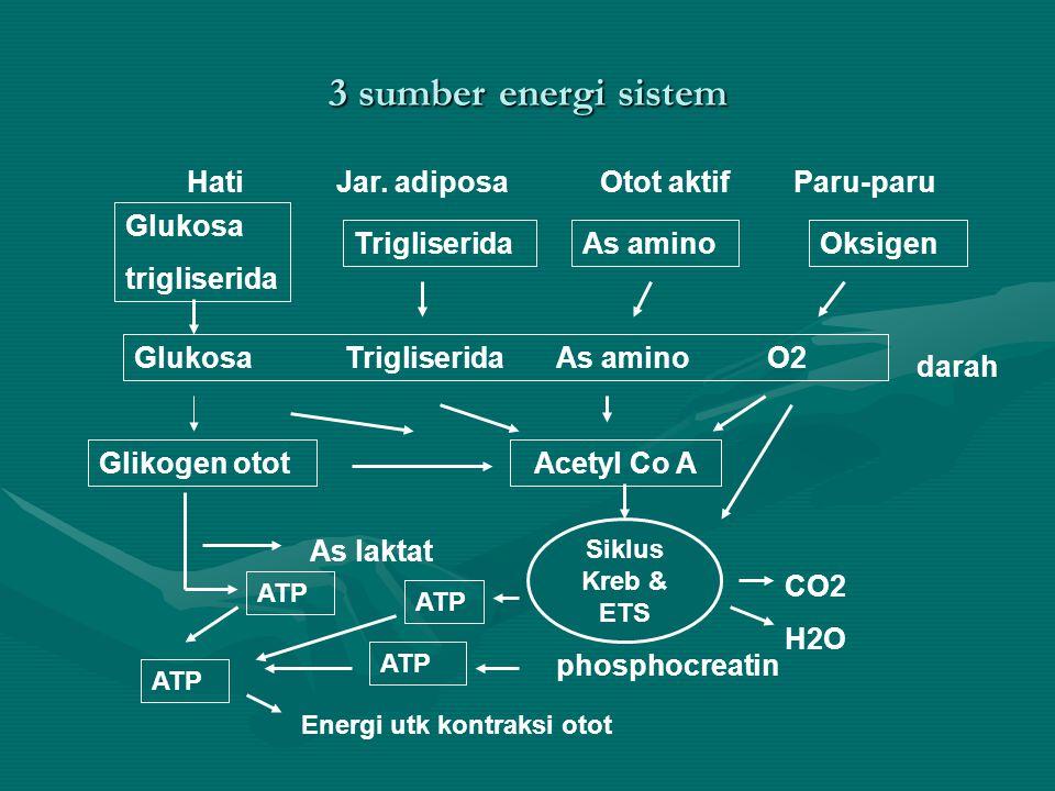 Kebutuhan energi Sesuai ukuran tubuh & jenis latihanSesuai ukuran tubuh & jenis latihan Aktifitas harian & olahraga.