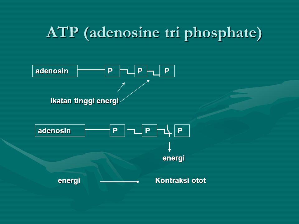 Sistem suplai ATP dalam tubuh ATP dpt dibentuk dri HA, lemak & prot, namun HA & lemak adl sumber utamaATP dpt dibentuk dri HA, lemak & prot, namun HA & lemak adl sumber utama Sistem anaerob tanpa pembentukan laktat.