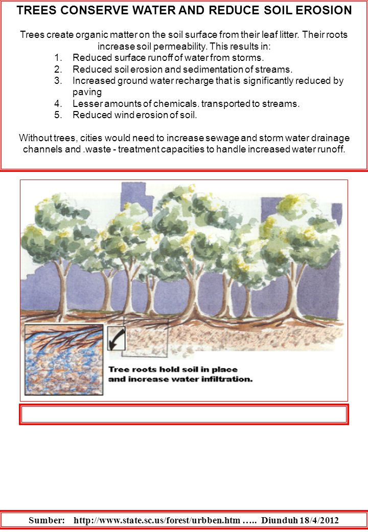 TREES CONSERVE WATER AND REDUCE SOIL EROSION Trees create organic matter on the soil surface from their leaf litter. Their roots increase soil permeab