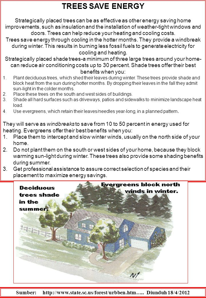 TREES SAVE ENERGY Strategically placed trees can be as effective as other energy saving home improvements, such as insulation and the installation of weather-tight windows and doors.