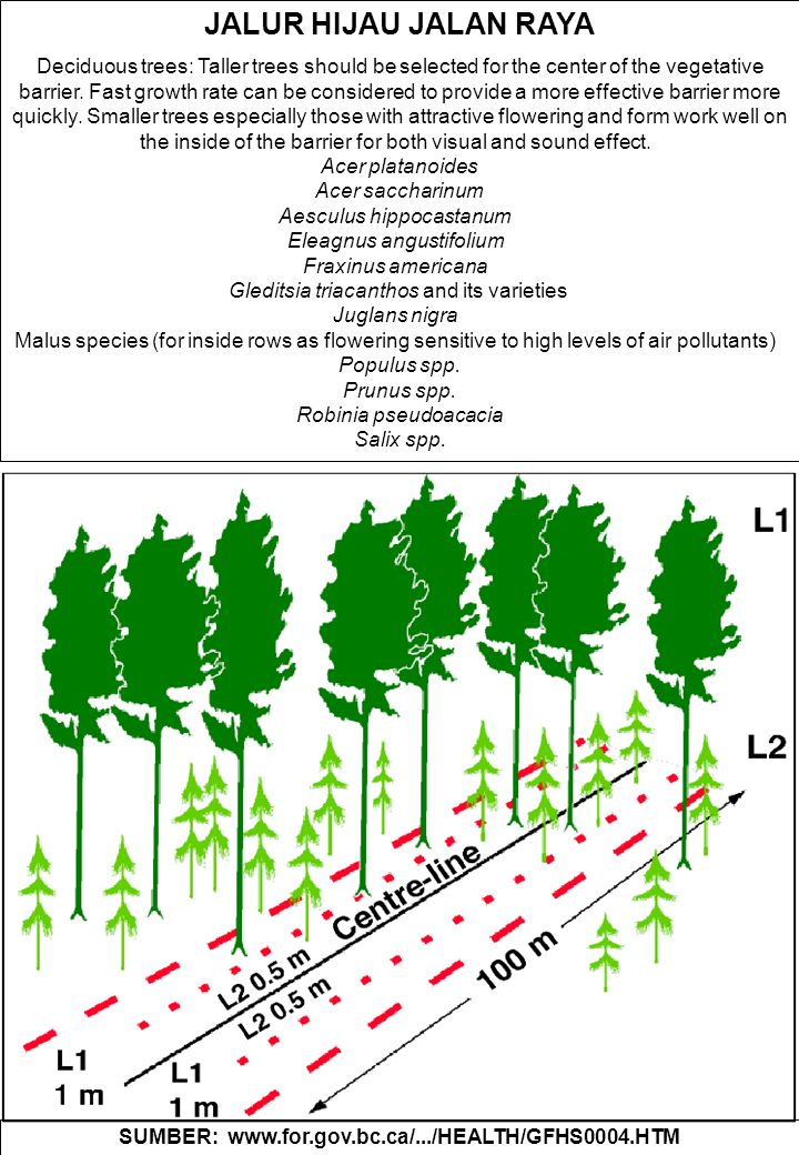 JALUR HIJAU JALAN RAYA Deciduous trees: Taller trees should be selected for the center of the vegetative barrier.