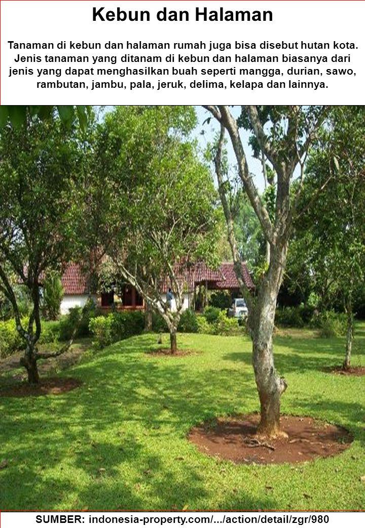 83 Kebun dan Halaman Tanaman di kebun dan halaman rumah juga bisa disebut hutan kota. Jenis tanaman yang ditanam di kebun dan halaman biasanya dari je