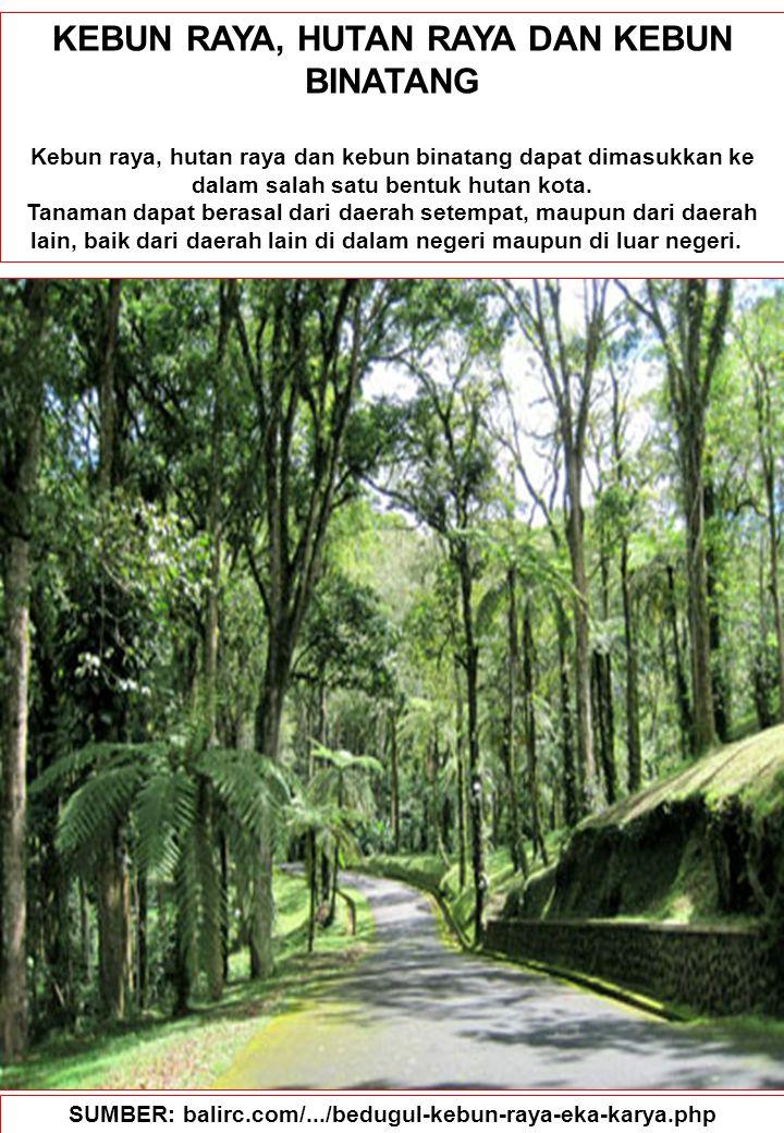 84 KEBUN RAYA, HUTAN RAYA DAN KEBUN BINATANG Kebun raya, hutan raya dan kebun binatang dapat dimasukkan ke dalam salah satu bentuk hutan kota. Tanaman