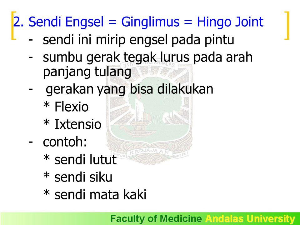 2. Sendi Engsel = Ginglimus = Hingo Joint - sendi ini mirip engsel pada pintu - sumbu gerak tegak lurus pada arah panjang tulang - gerakan yang bisa d