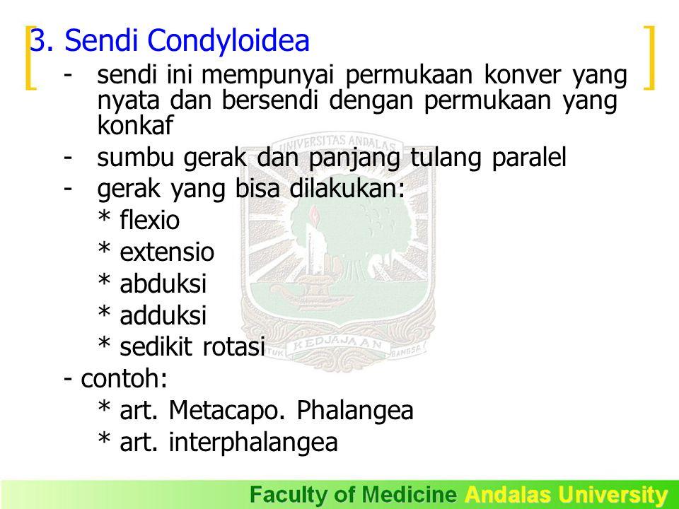 3. Sendi Condyloidea - sendi ini mempunyai permukaan konver yang nyata dan bersendi dengan permukaan yang konkaf - sumbu gerak dan panjang tulang para