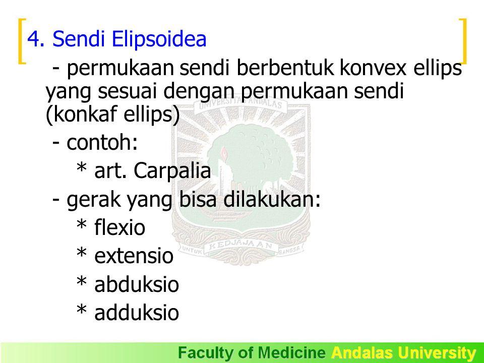 4. Sendi Elipsoidea - permukaan sendi berbentuk konvex ellips yang sesuai dengan permukaan sendi (konkaf ellips) - contoh: * art. Carpalia - gerak yan