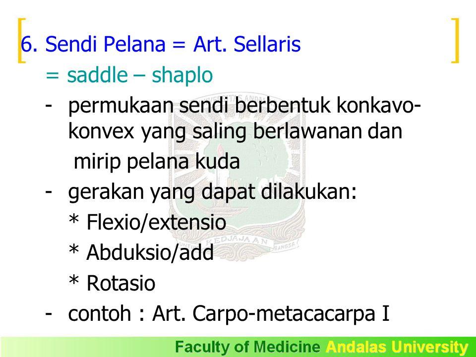 6. Sendi Pelana = Art. Sellaris = saddle – shaplo - permukaan sendi berbentuk konkavo- konvex yang saling berlawanan dan mirip pelana kuda - gerakan y