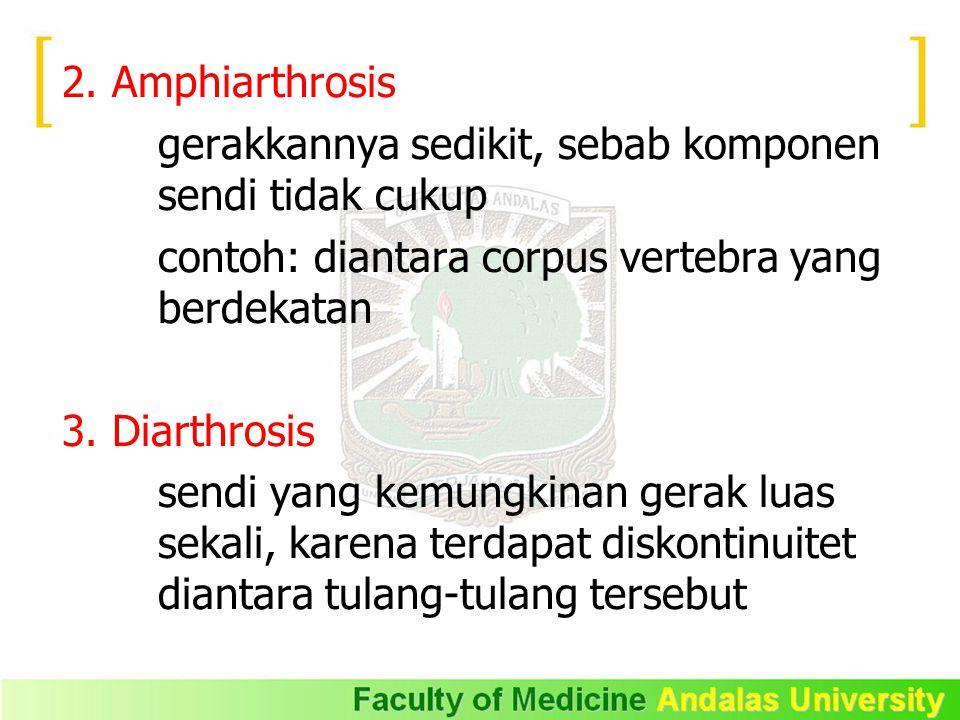 2. Amphiarthrosis gerakkannya sedikit, sebab komponen sendi tidak cukup contoh: diantara corpus vertebra yang berdekatan 3. Diarthrosis sendi yang kem