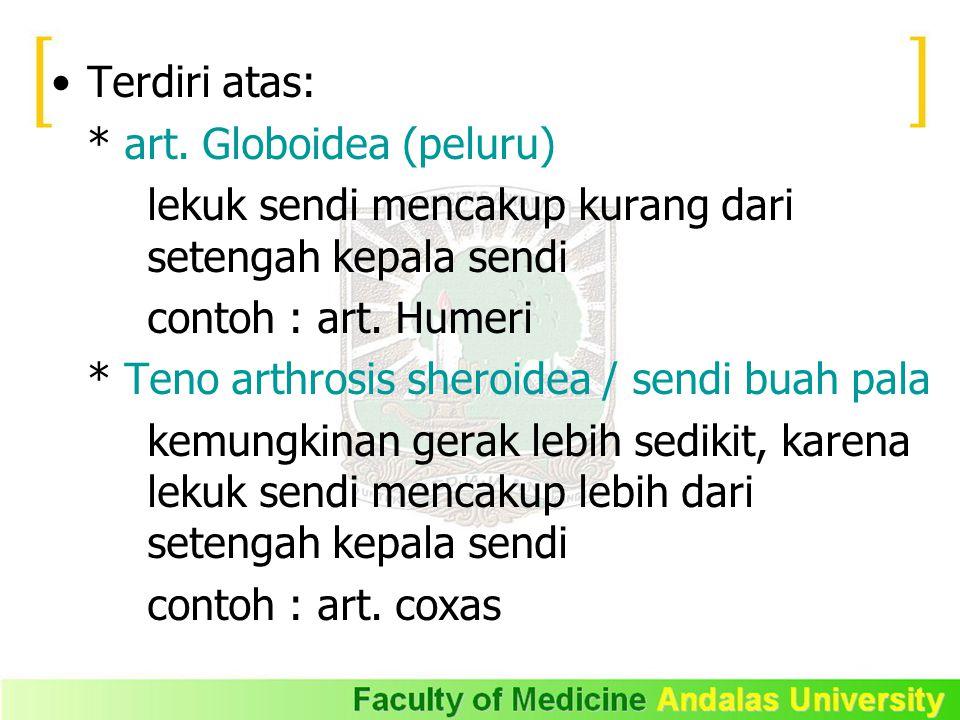 Terdiri atas: * art. Globoidea (peluru) lekuk sendi mencakup kurang dari setengah kepala sendi contoh : art. Humeri * Teno arthrosis sheroidea / sendi