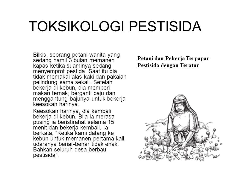 Bilkis, seorang petani wanita yang sedang hamil 3 bulan memanen kapas ketika suaminya sedang menyemprot pestida.