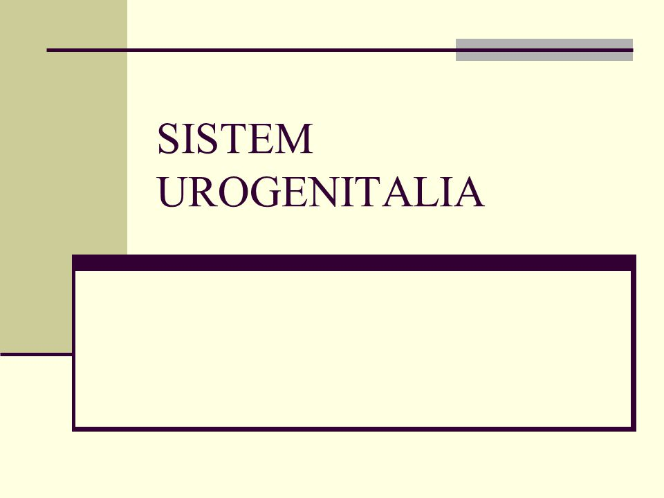 SISTEM UROGENITALIA