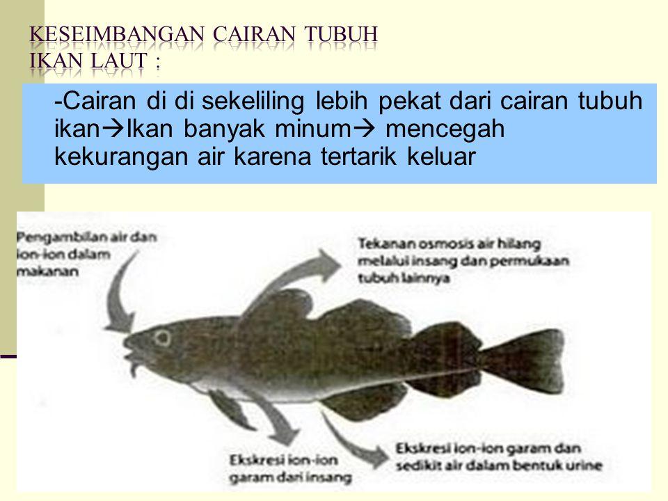 -Cairan di di sekeliling lebih pekat dari cairan tubuh ikan  Ikan banyak minum  mencegah kekurangan air karena tertarik keluar