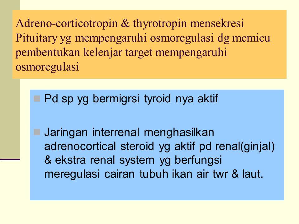 Adreno-corticotropin & thyrotropin mensekresi Pituitary yg mempengaruhi osmoregulasi dg memicu pembentukan kelenjar target mempengaruhi osmoregulasi Pd sp yg bermigrsi tyroid nya aktif Jaringan interrenal menghasilkan adrenocortical steroid yg aktif pd renal(ginjal) & ekstra renal system yg berfungsi meregulasi cairan tubuh ikan air twr & laut.