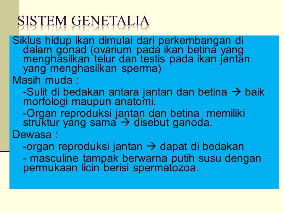 Siklus hidup ikan dimulai dari perkembangan di dalam gonad (ovarium pada ikan betina yang menghasilkan telur dan testis pada ikan jantan yang menghasilkan sperma) Masih muda : -Sulit di bedakan antara jantan dan betina  baik morfologi maupun anatomi.